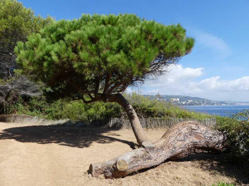 Ile Sainte Marguerite Les allées et plages
